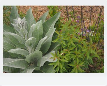 梅雨入り前にやっておきたい!お庭の植物・梅雨対策の方法をご紹介